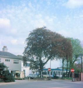 Villa St tree 2a